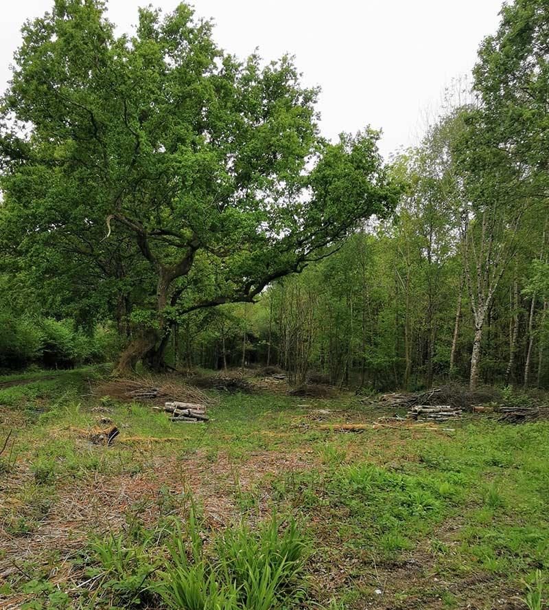 majestic oaks in sussex