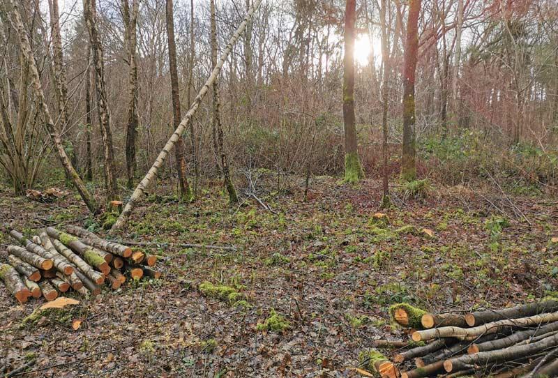 sussex land management consultancy