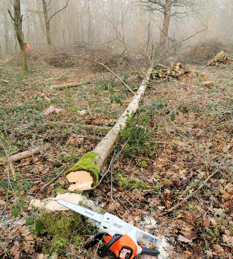 tree felling in mist