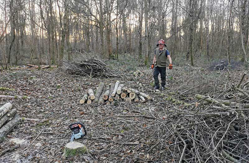 woodland rewilding wood